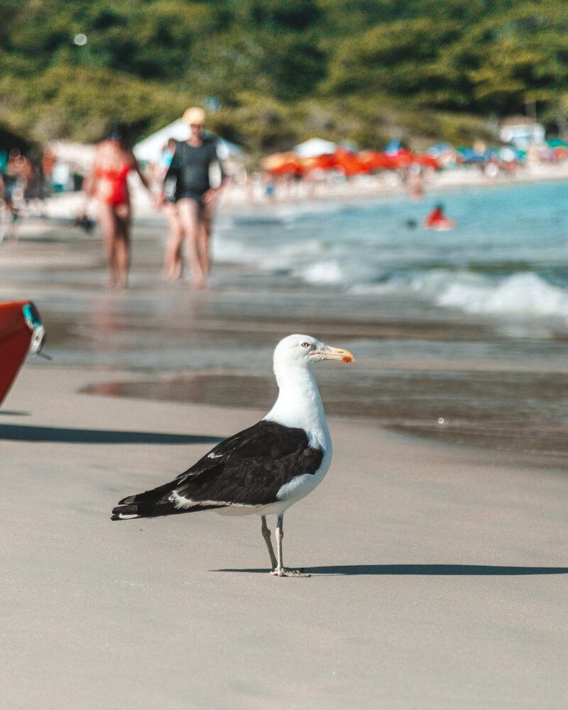 Gaivota na Praia do Forno