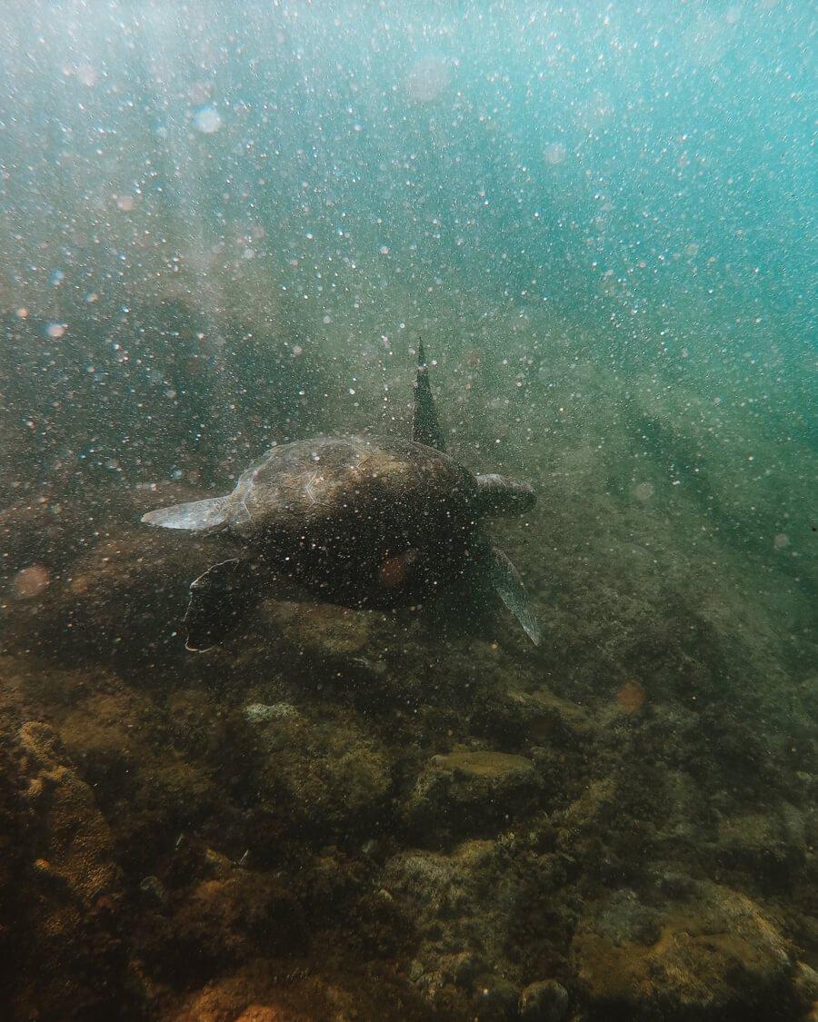Tartaruga na Praia da Graçainha - Arraial do Cabo