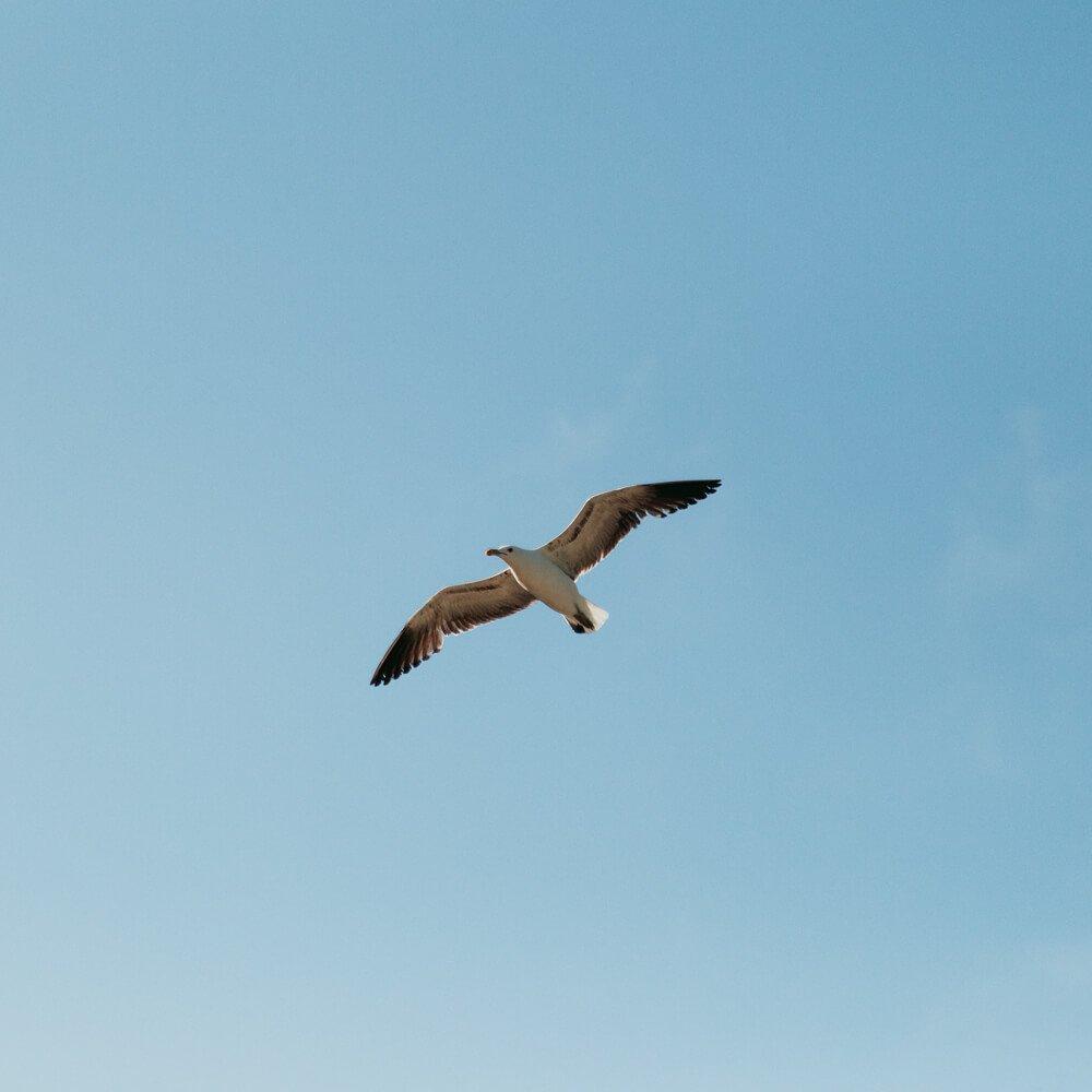 Praia do Forno, Arraial do Cabo - gaivota