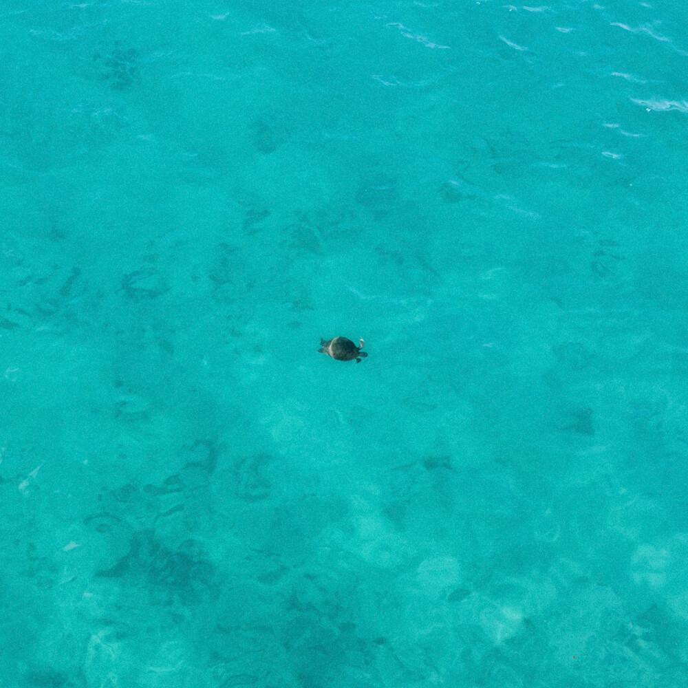 Praia do Forno, Arraial do Cabo - tartaruga