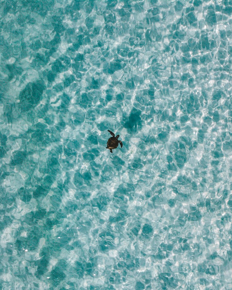 Tartaruga marinha fotografada na Praia Grande, Arraial do Cabo