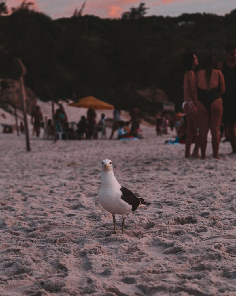 Gaivota durante o por do sol na Praia Grande