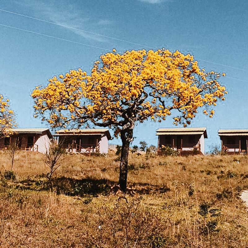 Cataguás Brasil - pousada Carrancas - ipê