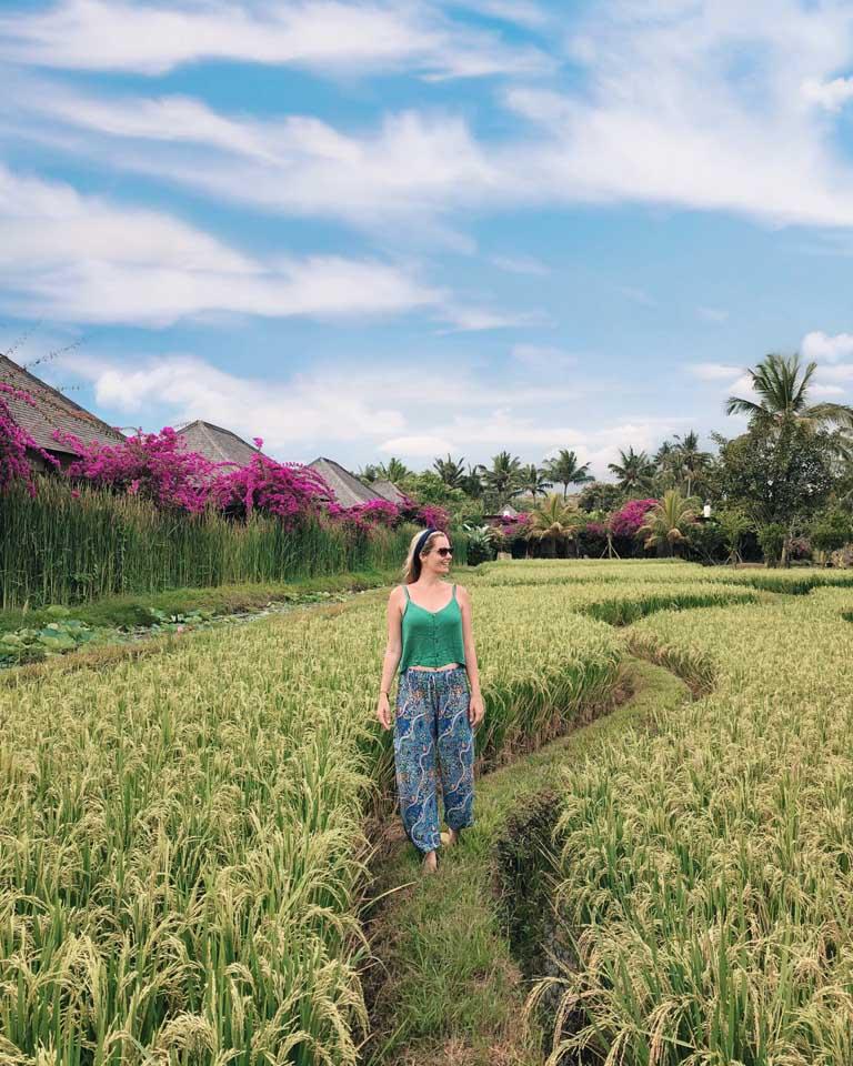 campos de arroz do Desa Visesa Ubud