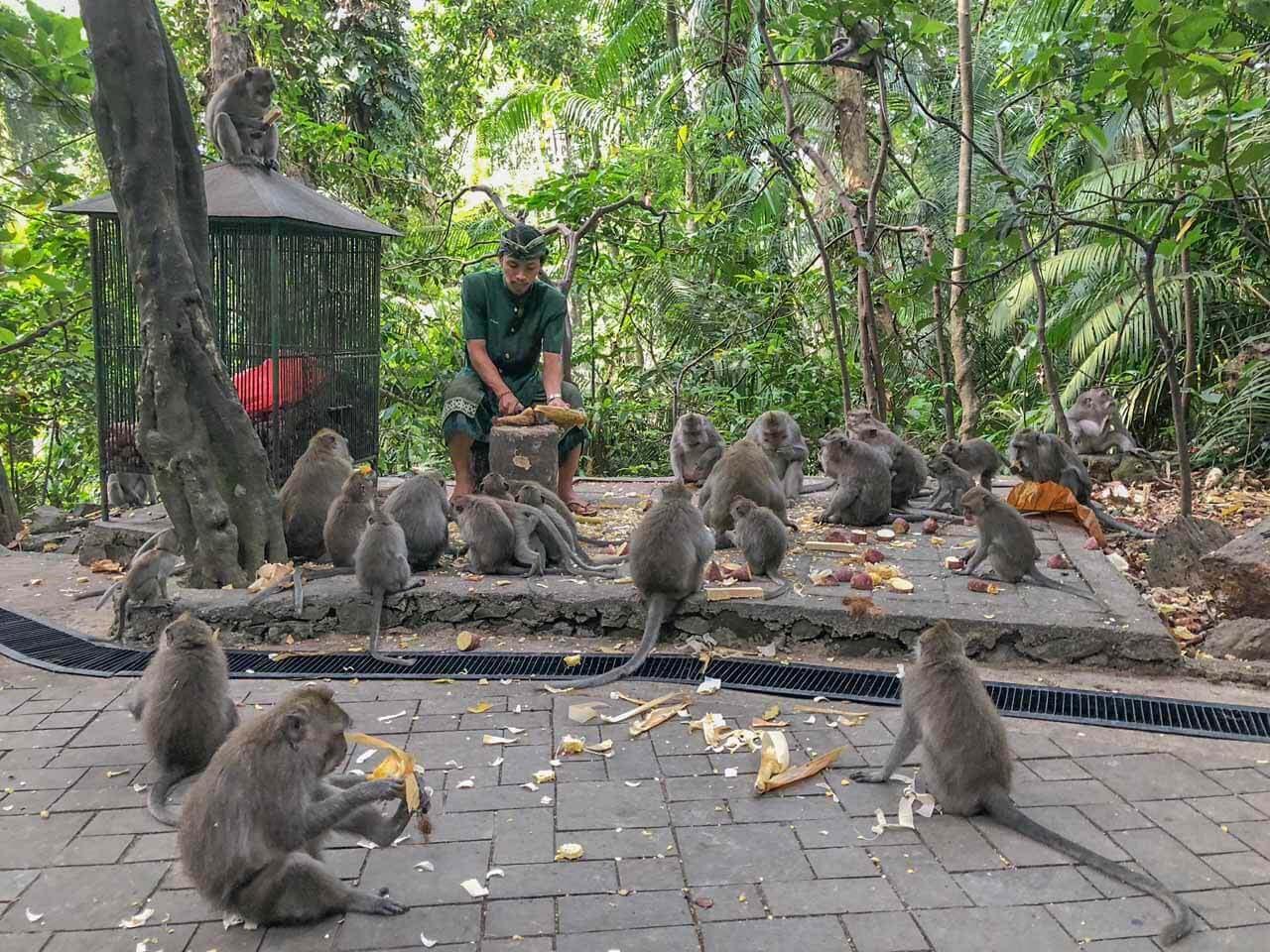Macacos na Monkey Forest em Ubud