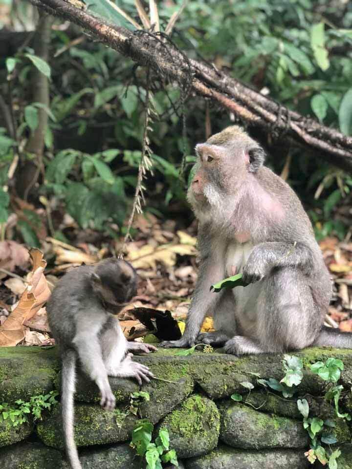 Monkey Forest em Ubud