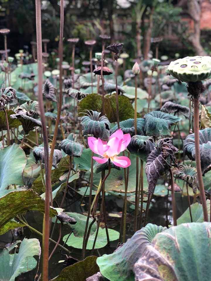Lotus café em Ubud