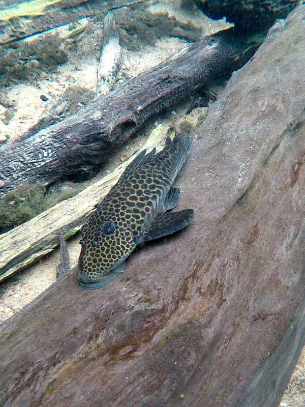 Lindo peixe no Rio da Prata em Bonito