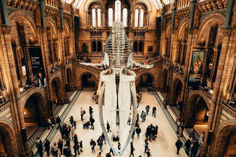 Ponto turístico de Londres: Museu de História Natural