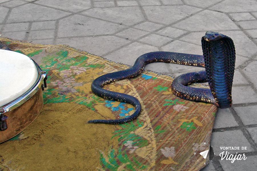 Marrakesh - Encantadores de serpente Naja na praca Djemaa El Fna