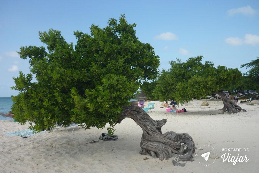 A pequena árvore divi divi indica o sudoeste