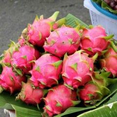 Tailandia - Frutas da Asia - Pitaia Dragon Fruit