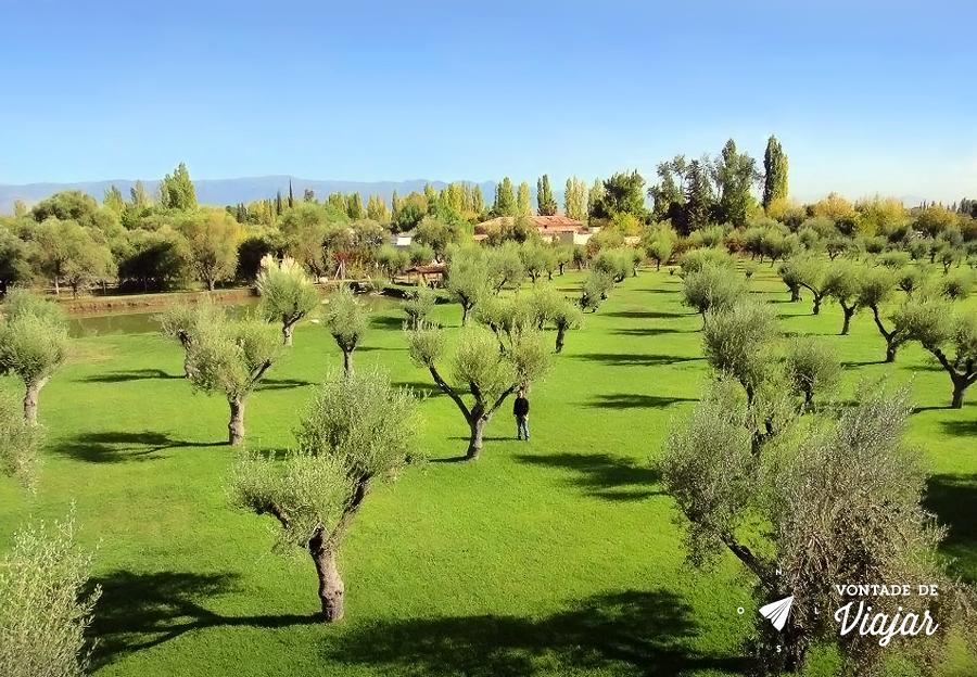 Mendoza - Plantacao de parreiras
