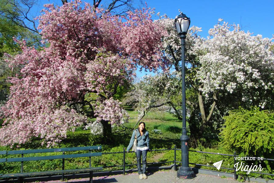 NY - As cerejeiras em flor no Central Park (foto de Makiko Yanagawa)