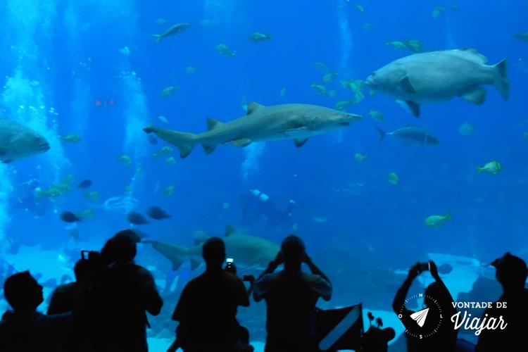 O que fazer em Atlanta - Georgia Aquarium - Tubarao