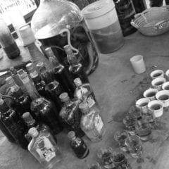Luang Prabang - snake whisky cobra