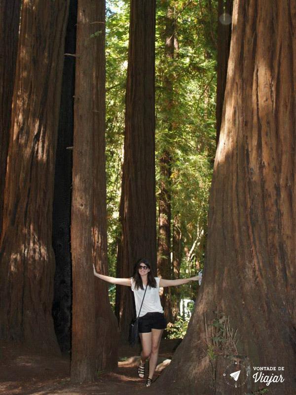 California - As arvores gigantes da California