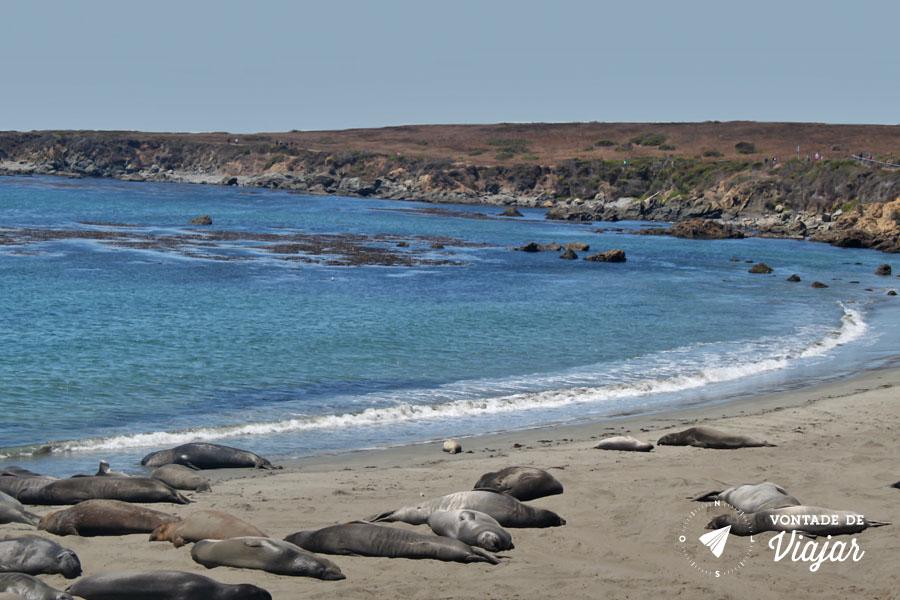 California - Leoes marinhos em um dos Point View da Highway 1