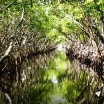 florida-parque-nacional-de-everglades