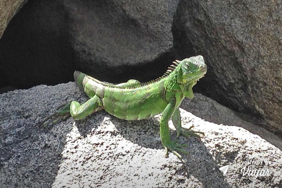 Aruba - Iguana - foto de Rafael Maia para o blog Vontade de Viajar