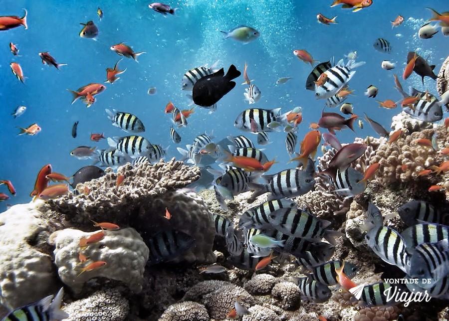 Aqaba Jordania - Peixes coloridos no Mar Vermelho