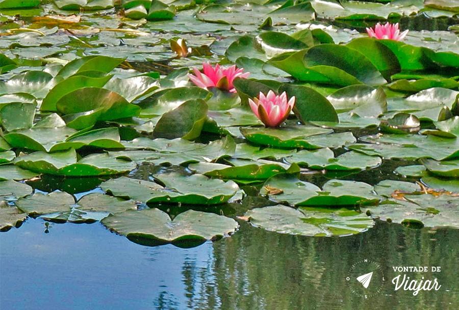 Giverny - Ninfeias de Monet em Giverny