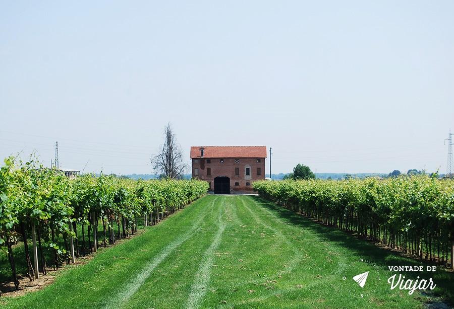Modena - Vinicola italiana lambrusco