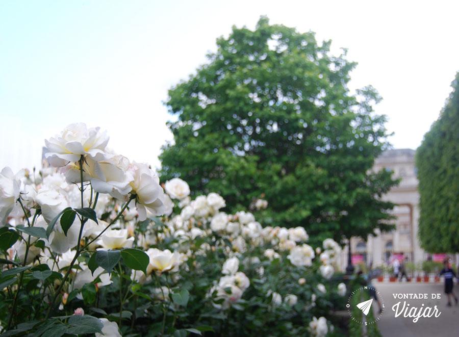 paris-jardim-do-palais-royal-rosas
